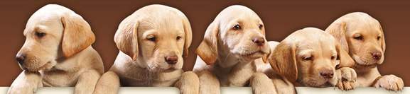 service_order_import_dogs
